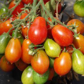 Радана семена томата индет. черри среднего 110-120 дн. груш. 25 гр. (Moravoseed)