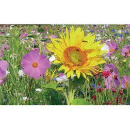 Медоносы друзья сада семена цветочной смеси (Nova Flore)