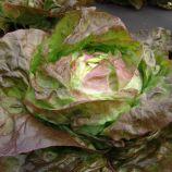 салат сагим маслянистый