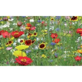 Леди бед (Божьи коровки) друзья сада семена цветочной смеси (Nova Flore)