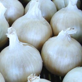 Авалон F1 семена лука репчатого среднего 125-130дн. 120гр белого (Moravoseed)