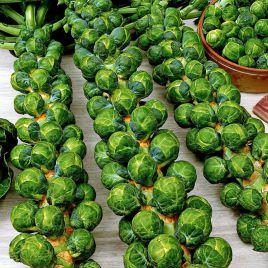 Гронигер семена капусты брюссельской среднепоздней 150 дн(Semo)