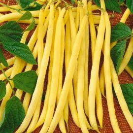 Аидаголд семена фасоли (Semo)