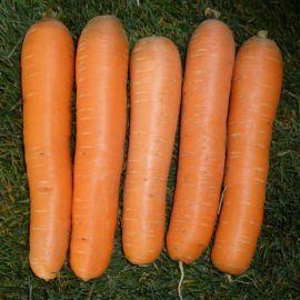 Анина семена моркови Нантес среднеранней 110-120 дн. (Semo)