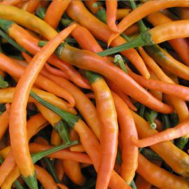 Килиан семена перца горького тип Чилли среднего 70-80 дн. удлинен. 9см зел/оранж. (Semo)