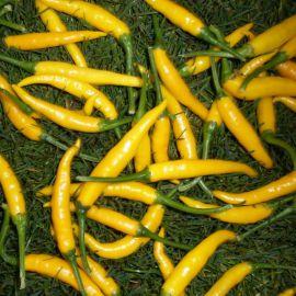 Кристиан семена перца горького тип Чилли среднего 70-80 дн. удлинен. 9см зел/желт. (Semo)