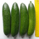 Бэйби F1 семена огурца партенокарп. раннего 35-40 дн. 15-17 см (Semo)