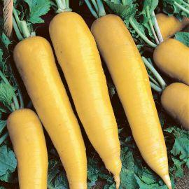 Лутеа семена редьки ранней конусов. желт. (Semo)
