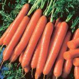Йолана F1 семена моркови Нантес среднеранней 90-100 дн. 18-22 см (Semo)