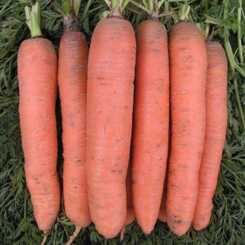 Рубина семена моркови Берликум (Semo)