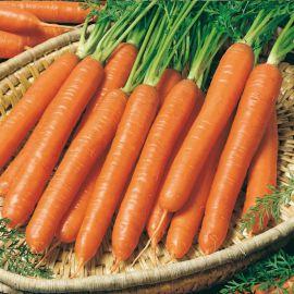 Смирна (Нантес) семена моркови Нантская среднеранней 110-120 (Semo)