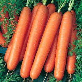 Ванда семена моркови Нантес (Semo)