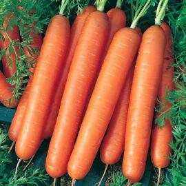 Ванда семена моркови Нантес среднеранней 110-120 дн. (Semo)
