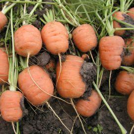 Рондо семена моркови Парижский рынок ранней 80 дн. (Semo)
