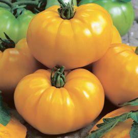 Гази Желтый семена томата индет. раннего 105-115 дн. окр-припл. 400-500 г желт. (Semo)