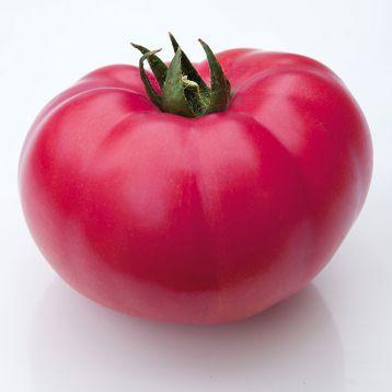 КС 3811 F1 (KS 3811 F1) семена томата индет. роз. (Kitano Seeds)