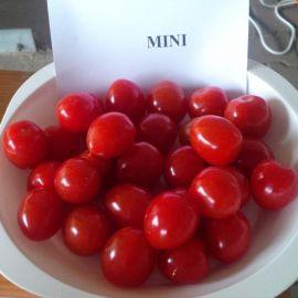 Мини F1 семена томата индет. черри раннего 105-115 дн. окр. 25 гр. (Semo)