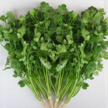 Лонг стендинг семена кориандра (кинзы) (Semo)