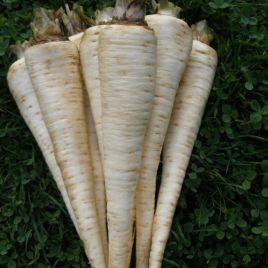 Ядран семена петрушки корневой (Semo)