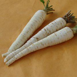 Оломунская семена петрушки корневой (Semo)