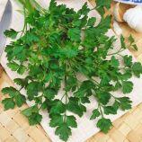 Фестиваль семена петрушки листовой (Semo)