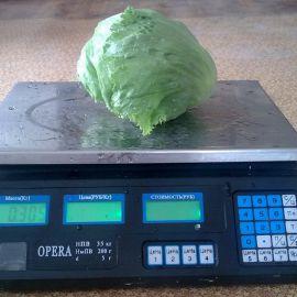 Минико семена салата тип Айсберг зел. (Semo)