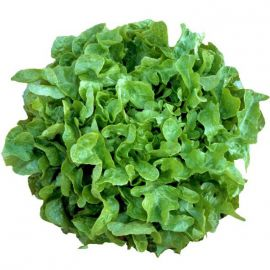 салат дубаголд дуболистный