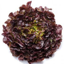 салат дуболистный дубаред