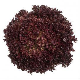 салат карминова лолло росса