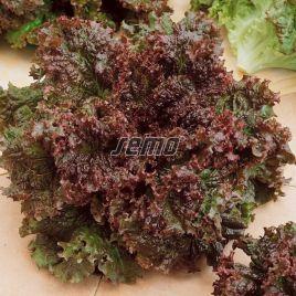 семена салата батавия роден