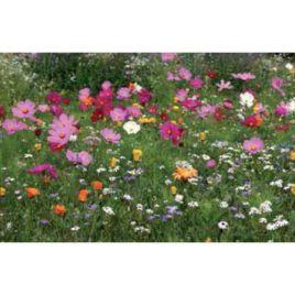 Сенсация гномики семена цветочной смеси (Nova Flore) НЕТ ТОВАРА