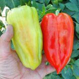 Слави F1 семена перца сладкого (Semo)