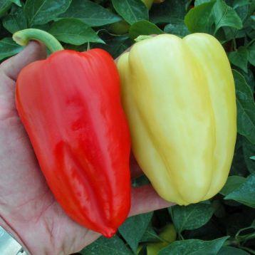 Слована F1 семена перца сладкого (Semo)