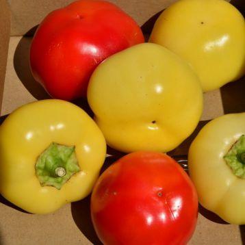 Палинда F1 семена перца острого (Semo)