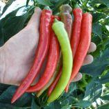 Паливец семена перца острого (Semo)