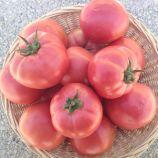 EZ 2104 F1 семена томата дет. розового (Erste Zaden)