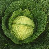 Верита F1 семена капусты савойской средней 95-100 дн. 2,2-2,4 кг окр. (Moravoseed)