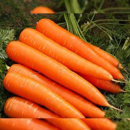 Франсис F1 семена моркови Флакке поздней 140-150 дн. (Moravoseed)