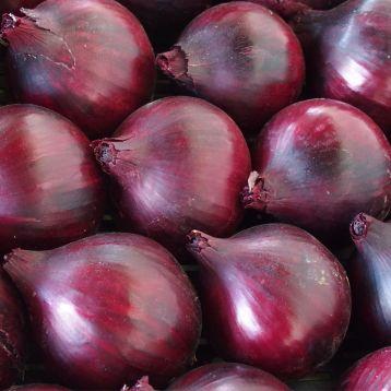 Магнате F1 семена лука репчатого красного среднего 115-120 дн 140-150 гр. (Moravoseed)