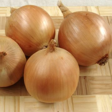 Сталагмит F1 семена лука репчатого тип Американский раннего 110-115 дн 160 гр. (Moravoseed)