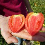 Белиз F1 семена томата дет. раннего 65-75 дн. 160-180гр. перцев. роз. (Erste Zaden)