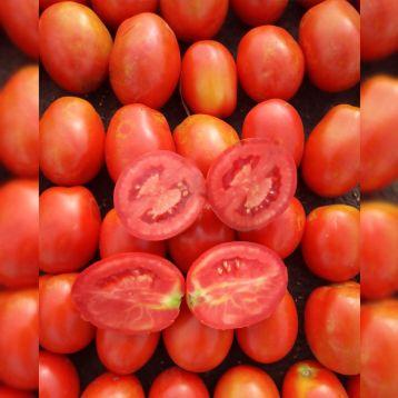 Рекордсмен F1 семена томата дет среднепозднего 115-120 дн 90-120 гр слив (Erste Zaden)