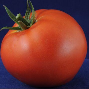 Твинкле F1 (Twinkle) семена томата дет. раннего 83-85 дн. окр. 150-160 гр. (Элитный ряд)