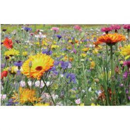 Мультиколор гномики семена цветочной смеси (Nova Flore)