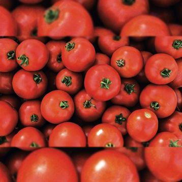 Мамако F1 семена томата дет ультрараннего 50-52 дн окр 100-110 гр (Syngenta)