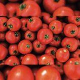 Мамако F1 насіння томата детермінантного (Syngenta)