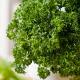 Кудринка семена петрушки листовой (Semo)