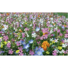 Экстра шорт (сверхкороткий) гномики на 30 кв. м семена цветочной смеси (Nova Flore) НЕТ ТОВАРА