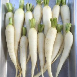 Рампоуч семена редиса (Semo)