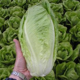 Гелбус семена салата тип Ромэн зел. (Semo)